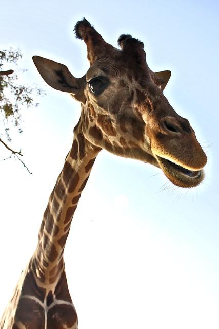 """I Am Giraffe Game """"I am an evil giraff..."""