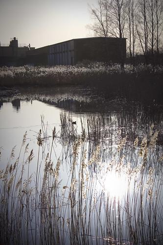 reflection water canon duck spring weeds sweden sverige vatten anka 2010 vår joakim johansson vass hallsberg 550d reflektioner alendri