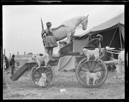 Dogs and horses in usual circus act