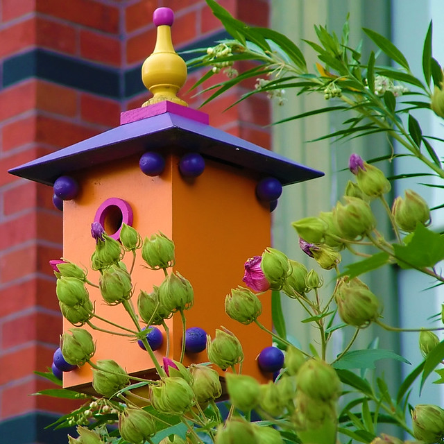 Dc Birdhouse I 39 M Going Color Crazy Actually Not Too