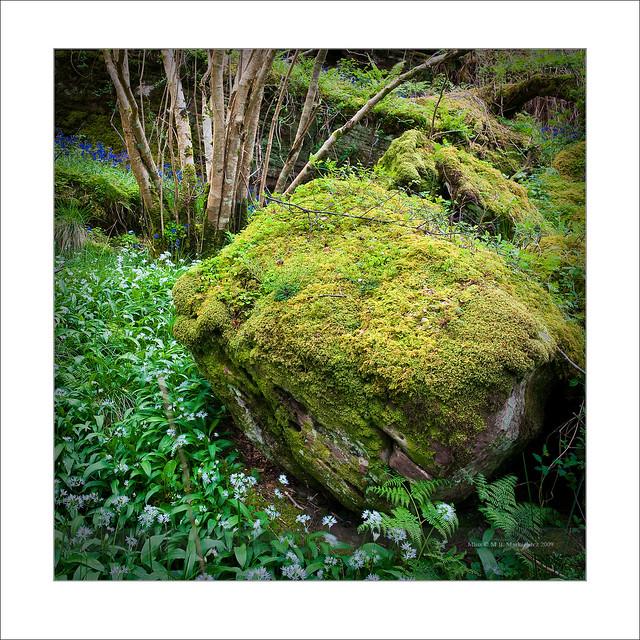 Nature on Arran