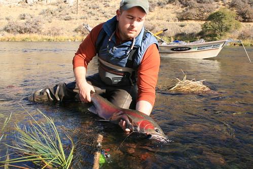 Three days swinging flies for deschutes river steelhead for Central oregon fishing report