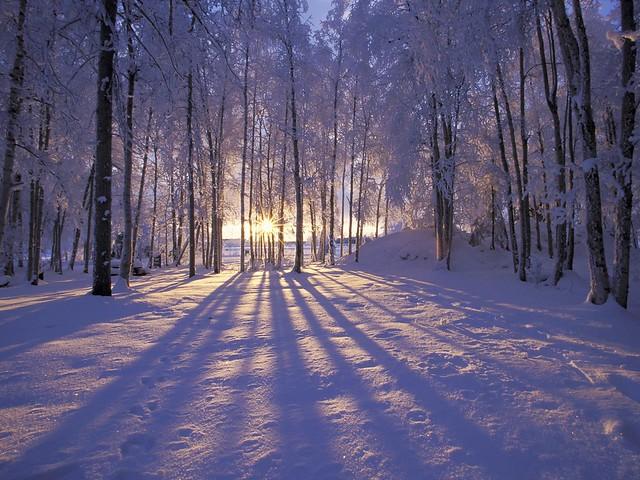 Sonne zwischen Bäume