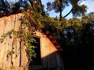 Old Barn Grapevine