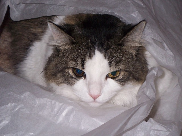 spud loves the tissue paper