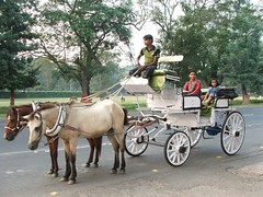 vehicle(1.0), pack animal(1.0), coachman(1.0), horse harness(1.0), horse and buggy(1.0), land vehicle(1.0), carriage(1.0), cart(1.0),