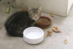 kitten health