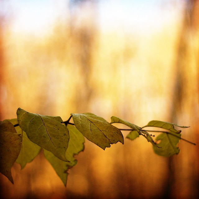 Photowalk 47 - Leaves on Fire