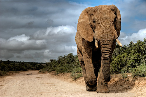 Walking Elefant