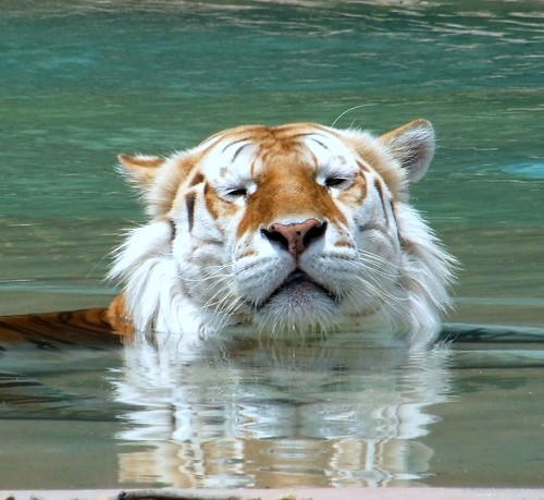 I'M NOT COMING OUT OF THIS POOL SO YOU CAN TAKE A PHOTO!!