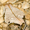 "<a href=""http://www.flickr.com/photos/charlestilford/4279210231/"">Photo of Bitis gabonica by Charles Tilford</a>"