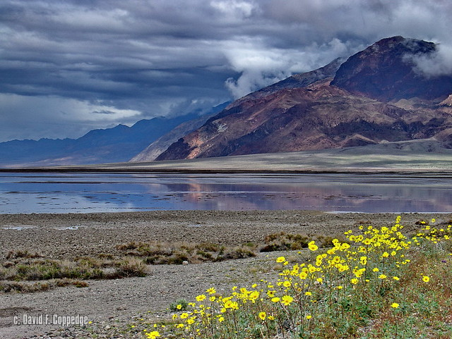 Death Valley showers & flowers