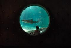 Gulf of Mexico Exhibit