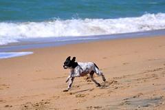 Huntington Dog Beach 2010