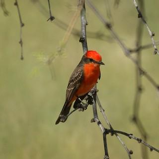 Nj Bird Photos Birds Of New Jersey