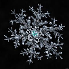Snowflake-a-Day Finale 2013-2014 (name TBD)
