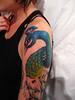 peacock in progress By Gene Coffey