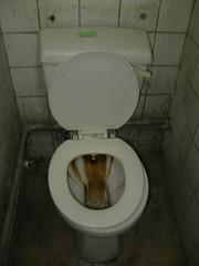 urinal(0.0), sink(0.0), floor(1.0), toilet(1.0), room(1.0), public toilet(1.0), plumbing fixture(1.0), toilet seat(1.0), bidet(1.0),