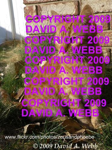 orange usa pet cute grass animals female cat outdoors photography utah kitten feline chat tabby adorable olympus whiskers phoebe precious gata provo striped redmackereltabby kittyschoice