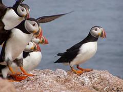 美國魚類暨野生動物署USFWS提供