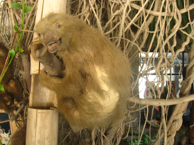 Sloth - Wikipedia
