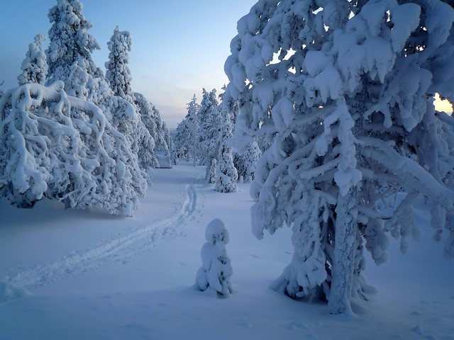 Un camino de nieve