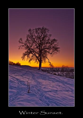 winter sunset snow tree ice twilight dusk sillhouette