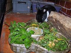 A bunny feast