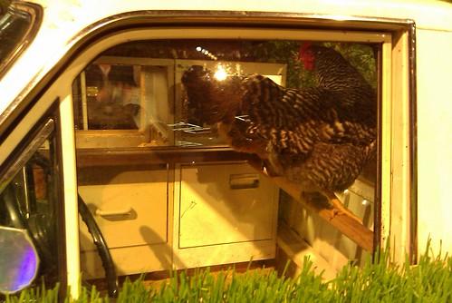 Pickup Truck chickens