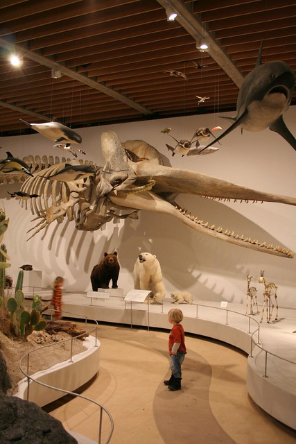 zoologiske museum Århus trænge ind