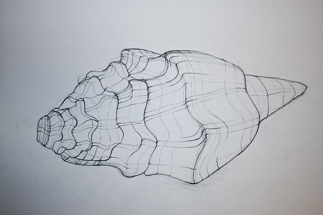Contour Line Drawing Shell : Shell contour drawing ii flickr photo sharing