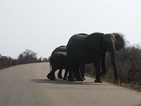 Safari Pictures 204
