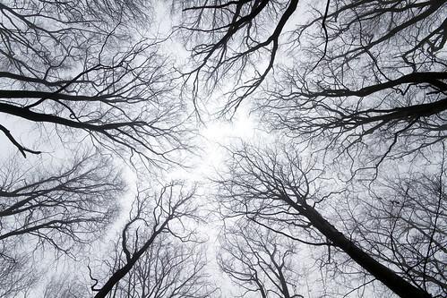 trees sky mist skåne sweden canopy tops beech kullen mölle sigma1020mmf456exdchsm canoneos7d kullen100327