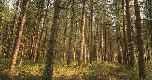A walk in a wood