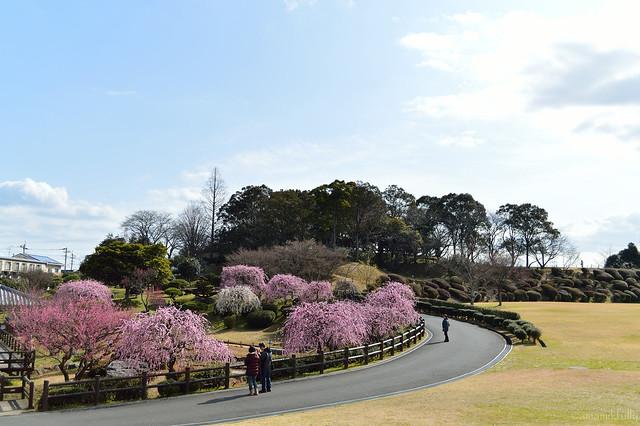 日本庭園_北九州市立総合農事センター