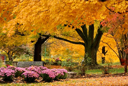 school autumn trees sky color tree fall beautiful beauty landscape landscapes october colorful wildlife indiana bloomington indianauniversity iu
