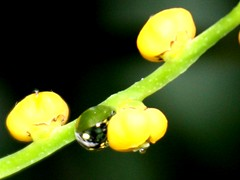 Drops - water pearls