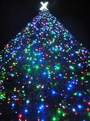 O HAI big tree