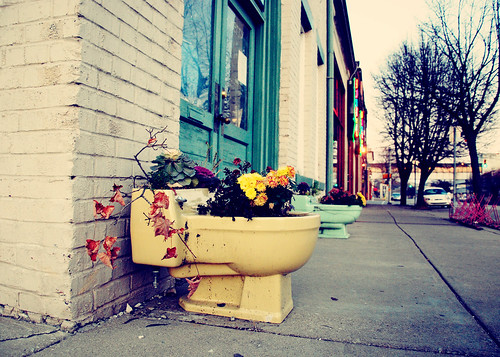 street city november flowers nikon indiana bloomington 2009 toilets antiqueshop d60 somethingmonumental mandycrandell