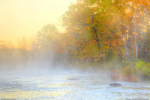 autumn trees mist leaves yellow fog sunrise reflections river landscape golden stream maine newengland autumnleaves morningmist morningfog sebecriver sebecmaine