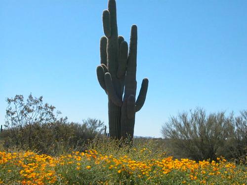 Sonoran Spring