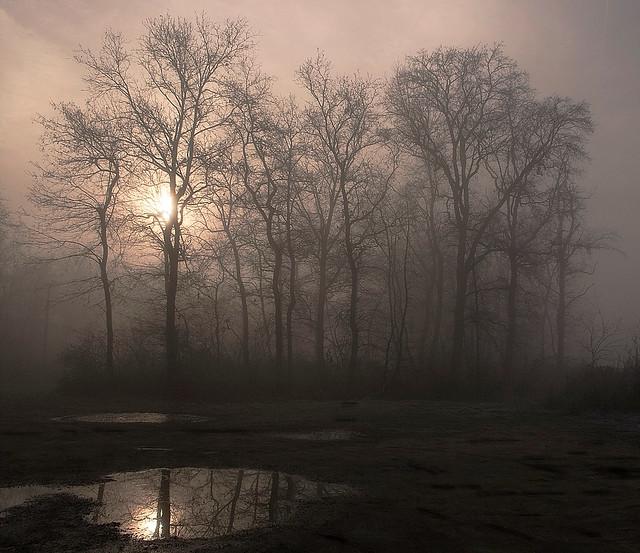 Calda nebbia....