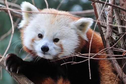 Nice Endangered Animals photos