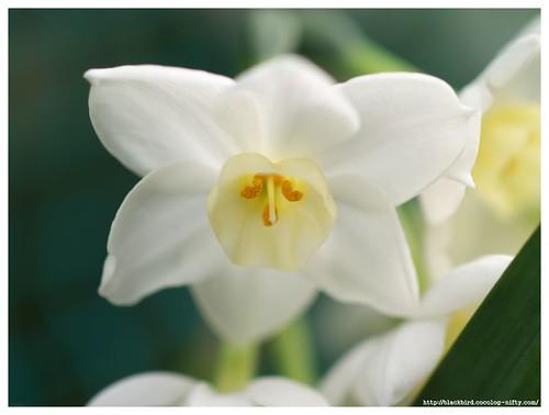 Inside of the flower