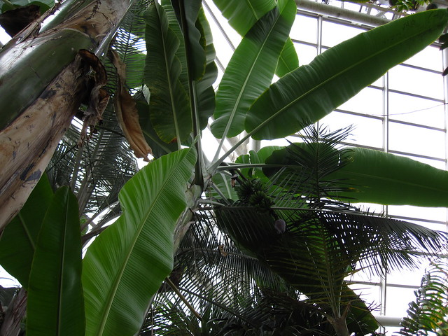 The Tropical Pavilion of the Steinhardt Conservatory.