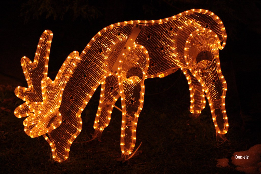 Natale 2009.Natale 2009 Daniele Flickr