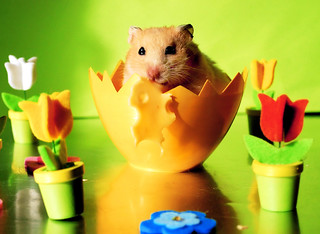 Easter Kokosanka