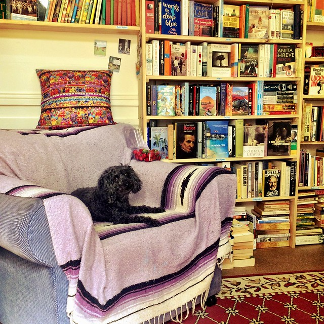 Ebony the bookshop dog