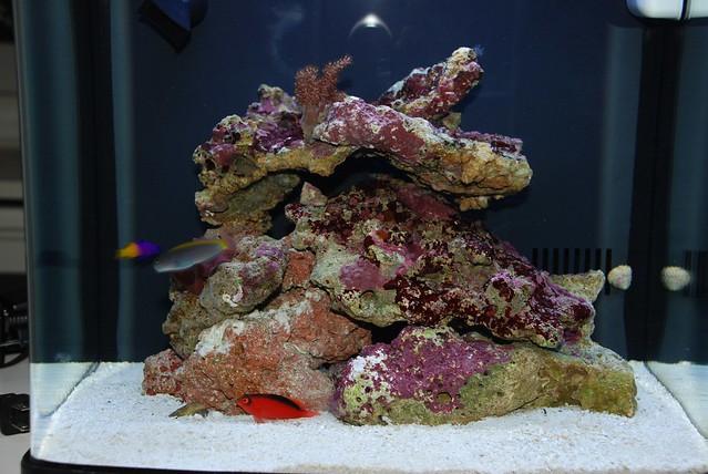 200 Gallon Aquarium For Sale Used