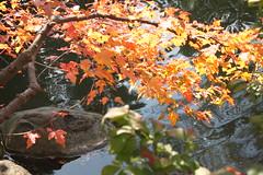 Illinois: Anderson Japanese Gardens